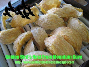 金山洞燕窝  GOLDEN BIRD'S NEST FROM MOUNTAIN CAVE