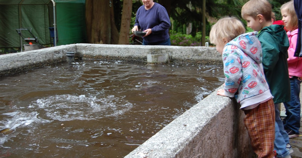 The knight life gold creek trout farm field trip - Trout farming business family mountains ...