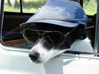 Fonds d'écran chien avec une casquette