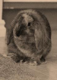 Caesar Bunny