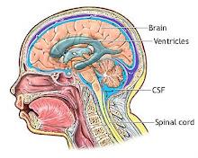 Meninges que ficam no cerebro