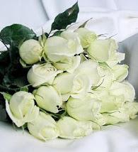 **Rosas Blancas**