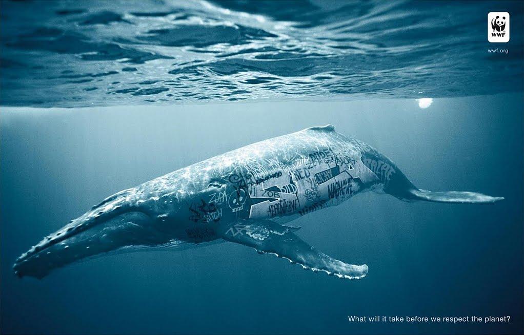 world wide fund for nature wwf Wwf (tłum światowy fundusz na rzecz przyrody dawniej world wildlife fund i world wide fund for nature) – organizacja pozarządowa i ekologiczna o charakterze.