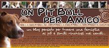 Un Pitt Bull per amico