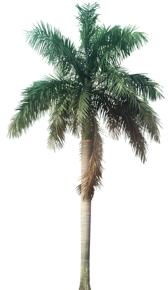 palm tree transparent background bing images willow tree clipart png willow tree clip art with yoga kids