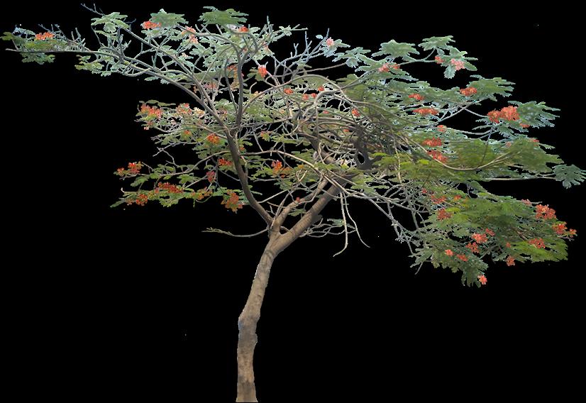 Free Dog Gum Tree