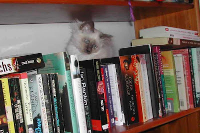 kitten on a bookshelf
