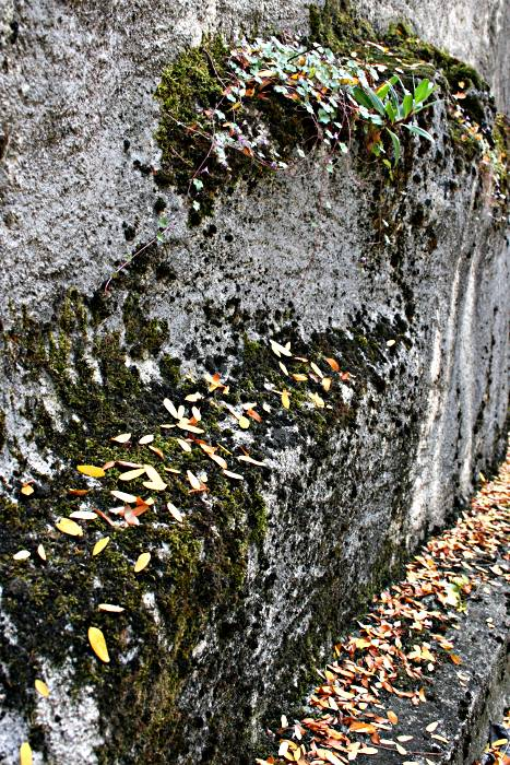 leaves settled on garden wall surfaces