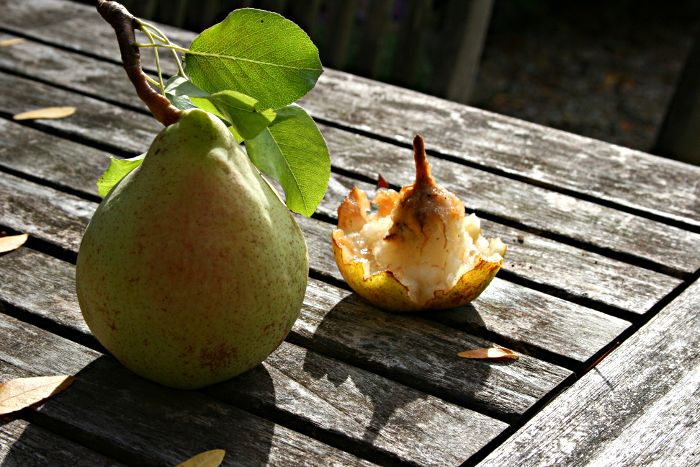 pear and remains of pear on garden table