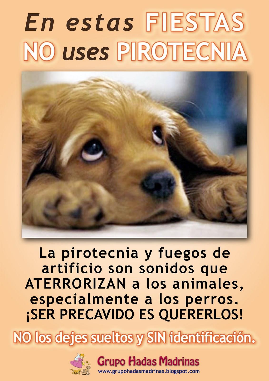 Perros que sufren por la pirotecnia...