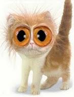 Blog vacinado contra olho grande!