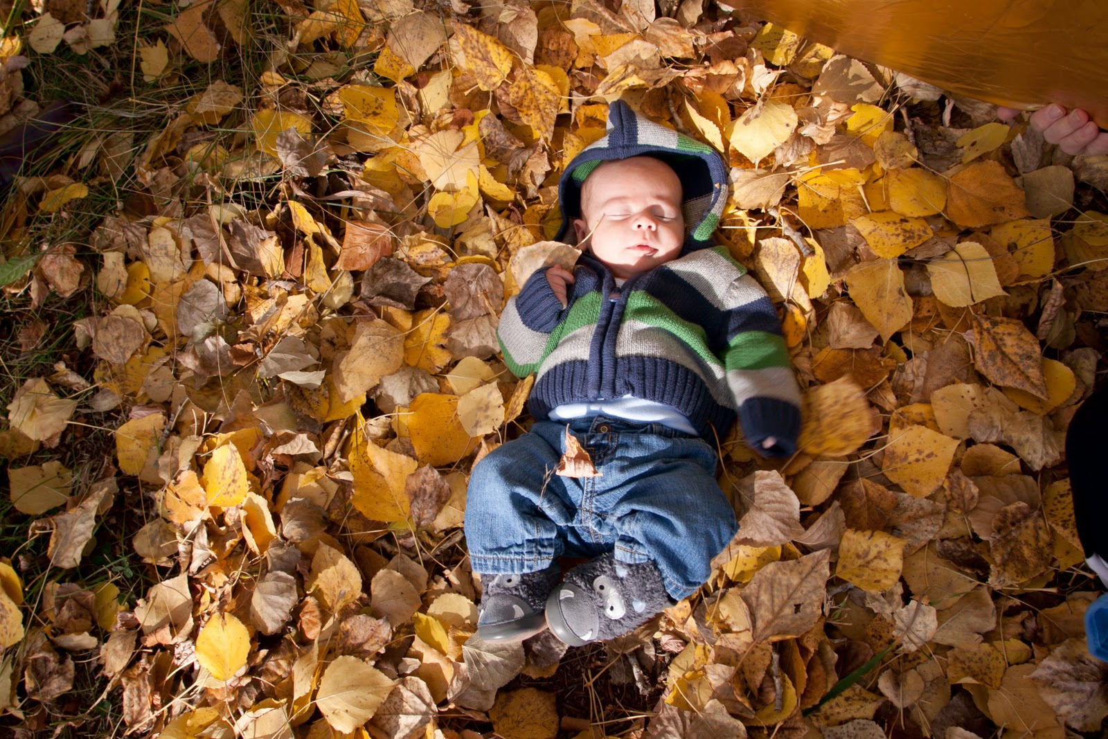 Fall Family Picture Ideas http://gordee09.blogspot.com/2010/10/fall-scenery-family-photo-shoots-and.html