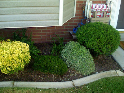 villagetowns: View of front yard landscaping