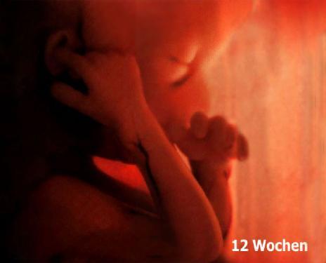 12 semanas