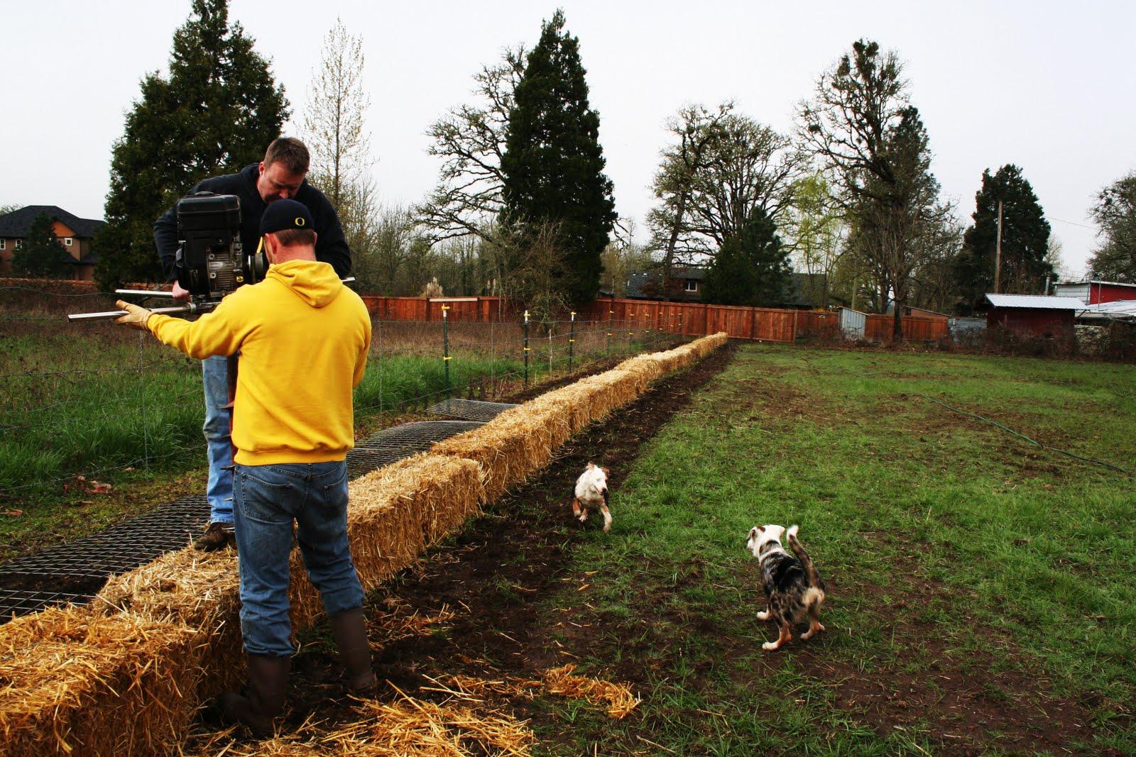 A Most Uncivilized Adventure: Straw Bale Gardening...
