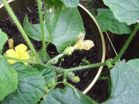 My gardening and beekeeping Forum: A big update.....