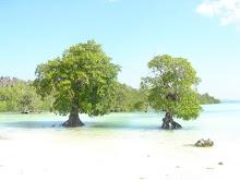 Pantai Nebrala-Rote Timor