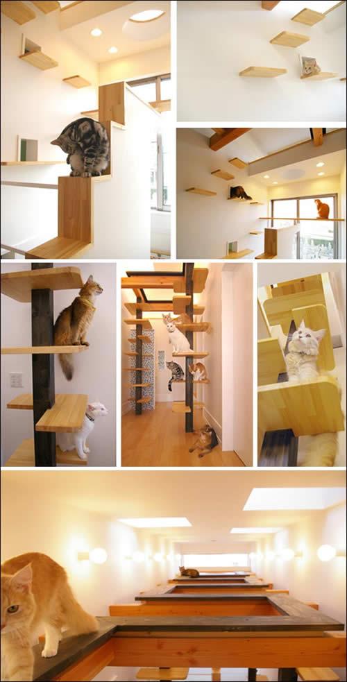 Garota na rotina casa ideal para gatos - Casa para gato ...