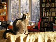 PD Budd in Winter Sun