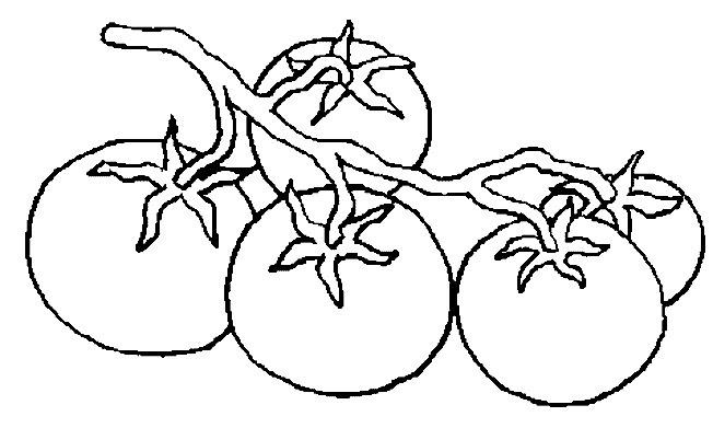 Huerto natural verduras para colorear tomates - Dessin de tomate ...