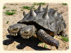 exotic animals for: What Do Turtles Eat ?