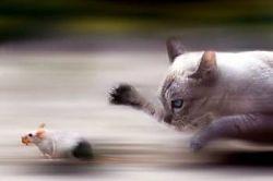 haioase animale imagini amuzante pisici
