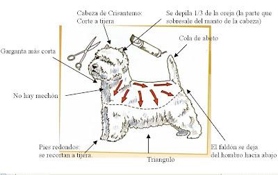 Aprende a cortarle el pelo a tu perro en siete pasos Mascotas - Corte De Pelo Para Perros