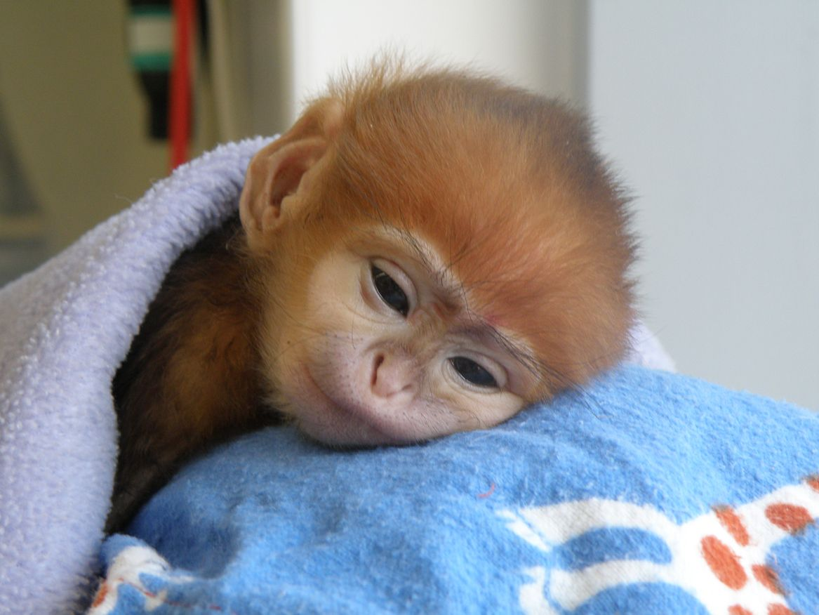 images of cute baby monkeys - photo #3