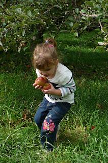 Heinz Orchard