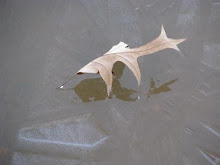 Leaf trapped in Ice