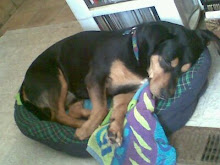 MacDubh on his doggy bed...