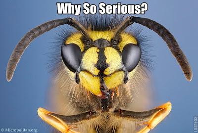 LSAT Blog Diary Supernatural Wasps