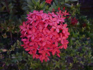 image flower, beatifull flower
