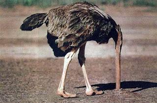 [ostrich.jpg]