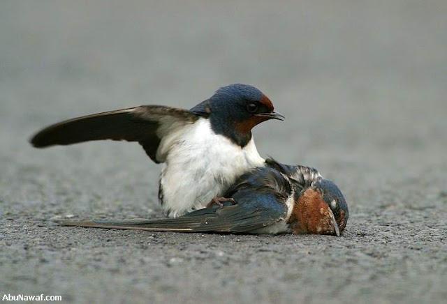love_birds6.jpg