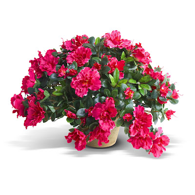 New Growth Design makes a wide variety of artificial plants, including this azalea.
