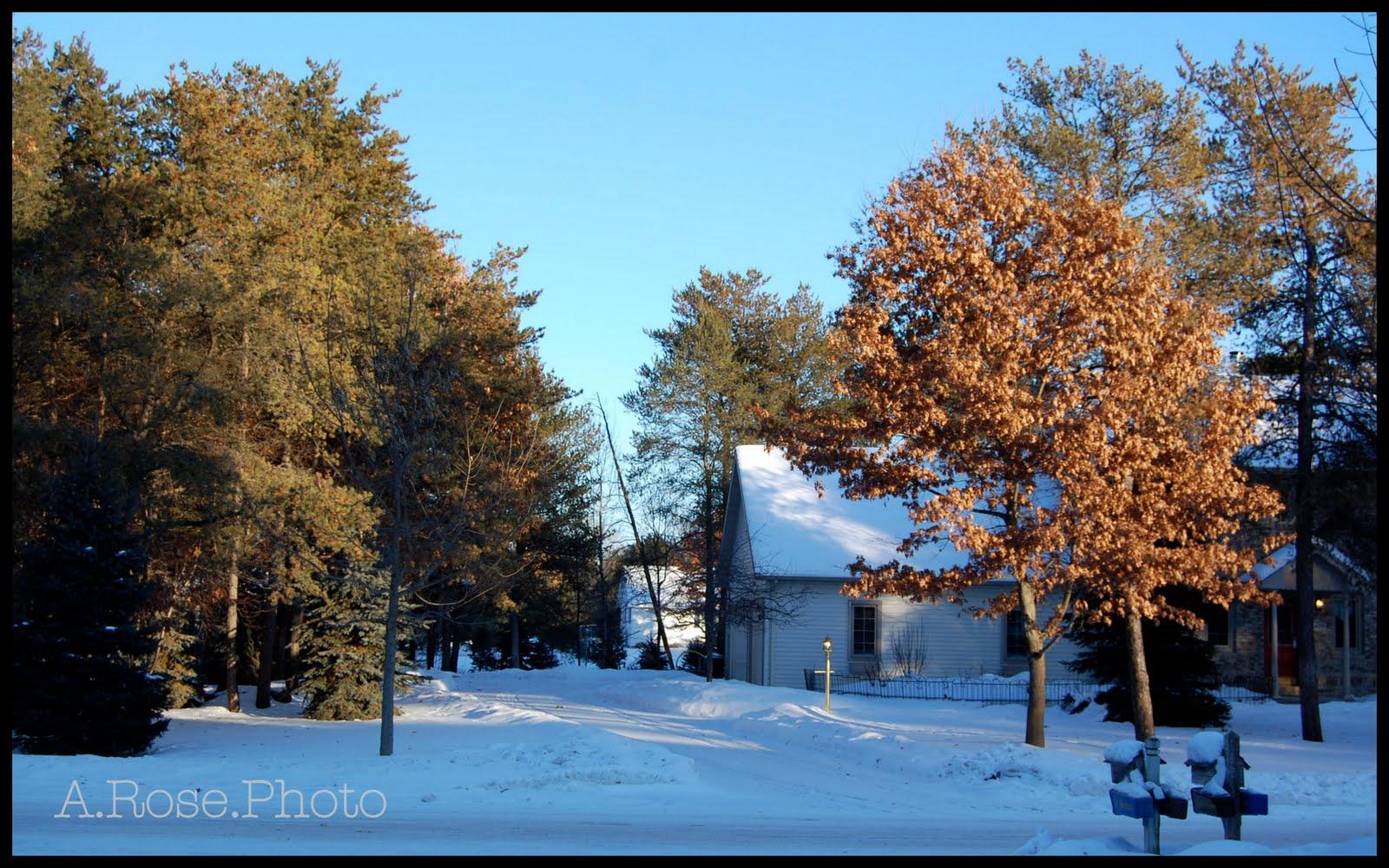 [yard+in+winter]
