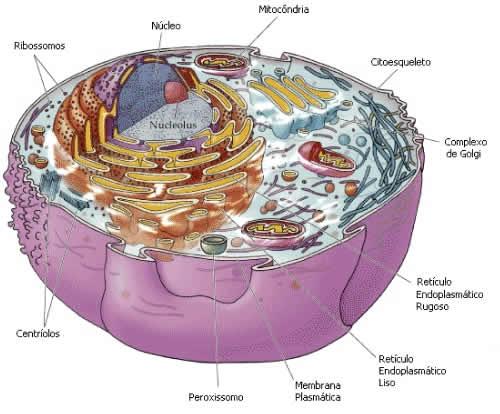 imagenes de celula vegetal. celula animal y celula vegetal