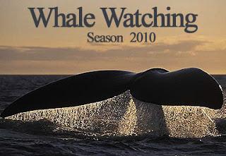 Whale Watching Season 2010 Puerto Piramides Valdes Peninsula Patagonia Argentina