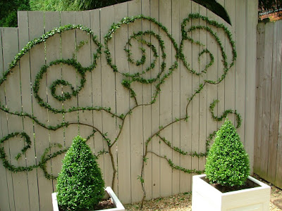 espaliered pyracantha...isn't this the coolest thing??