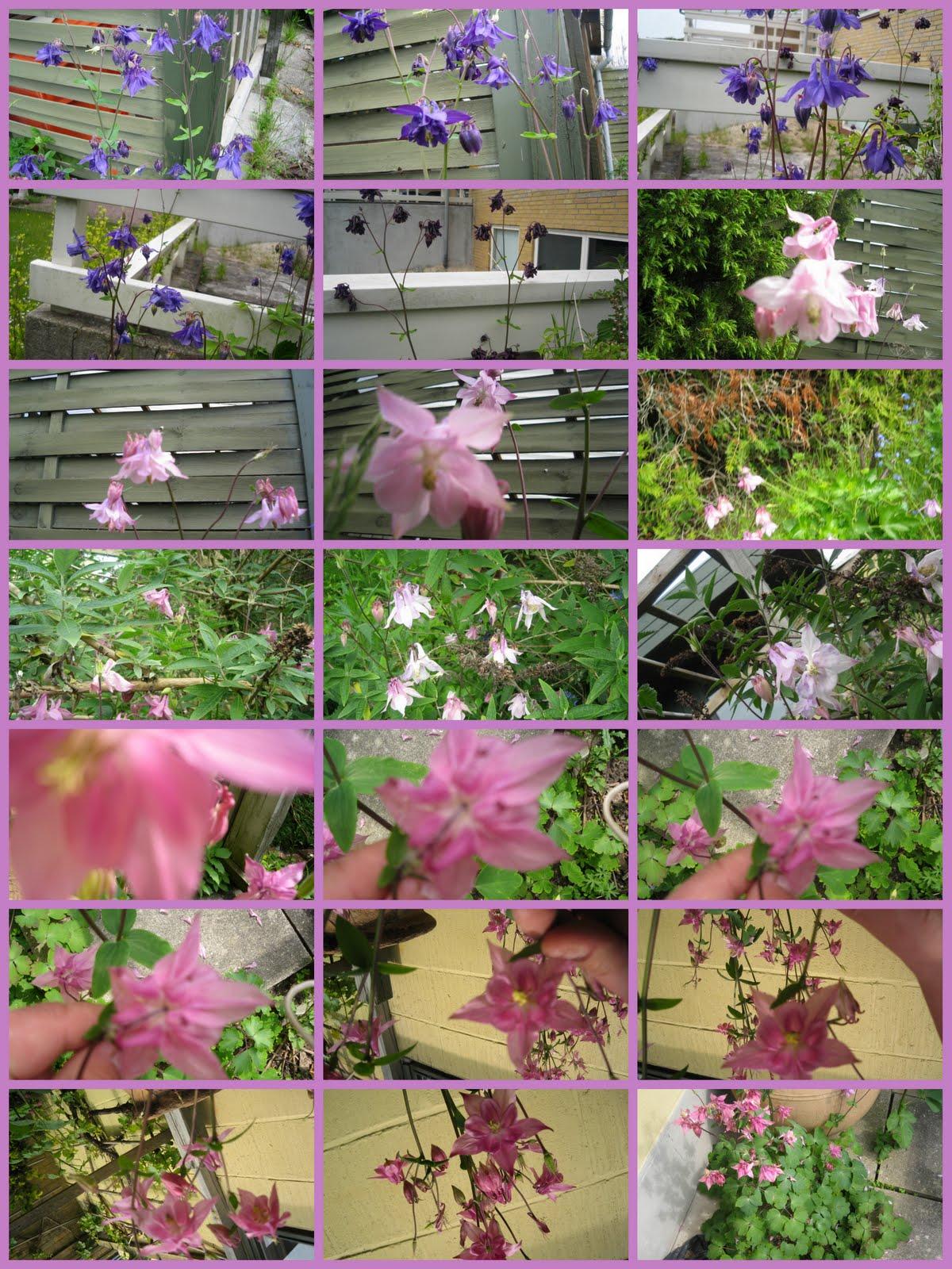 Blomster billeder fra aksels have juni 20102