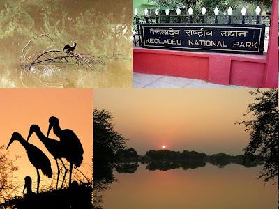 Keoladeo Ghana National Park, Bharaptpur