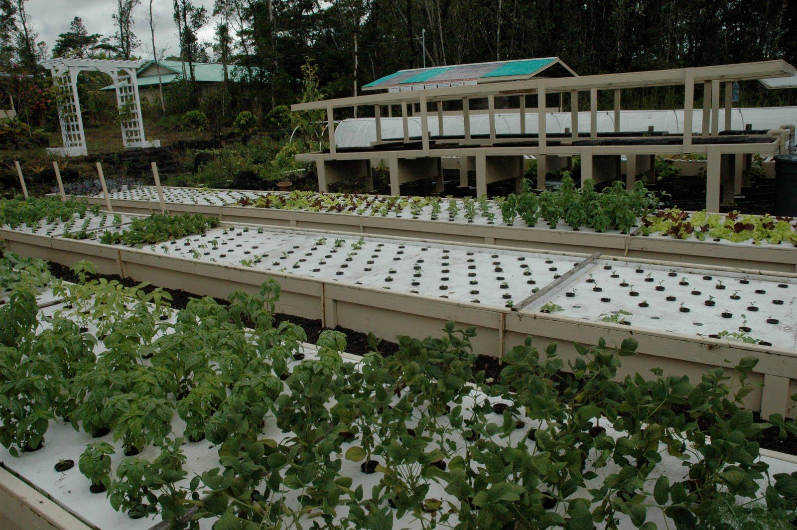 Hawaii real estate aquaponic farm for sale for Aquaponics hawaii