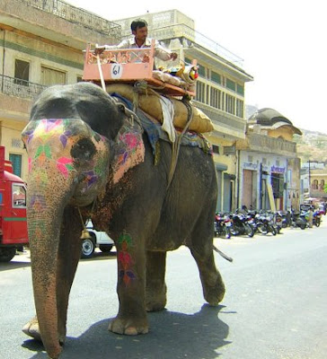 Image of an Elephant In Jaipur Amer