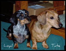 Tate     9/21/2000  ~  LOYAL    11/28/2003