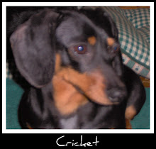 CRICKET   8/5/2003