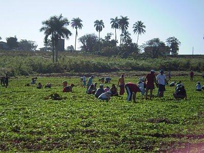 quinta brigada de solidaridad con Cuba