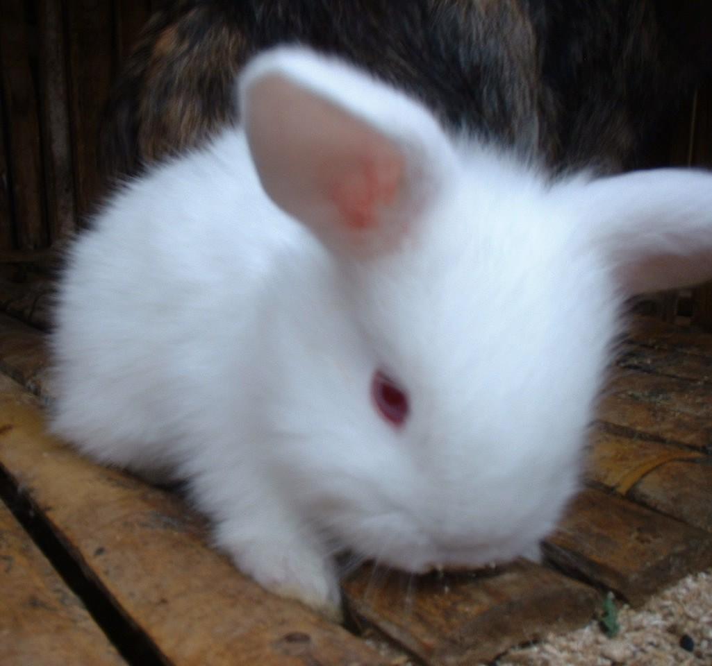 Koleksi gambar kelinci, foto kelinci anggora, rex, hias dll