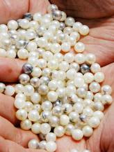 akoya pearls from dead oysters
