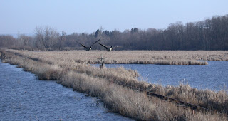 Horseheads Marsh
